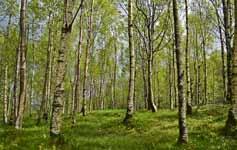 Foreste e … dintorni