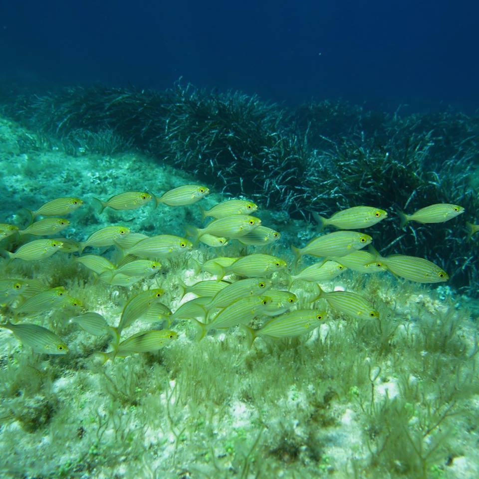 Abissi marini, proposta per tutelarli