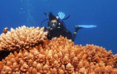 Corso di Perfezionamento per operatori subacquei
