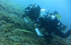 Novità: Biologia Marina internazionale