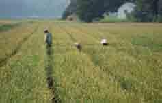 Esperto in  gestione della conversione alle produzioni agro-alimentari biologiche e biodinamiche
