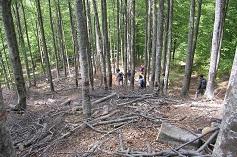 Opportunità occupazionali in boschi e foreste
