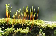 Biologico in crescita, servono professionalità e formazione
