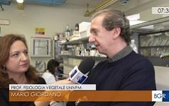 Pasta bio alla spirulina made in Marche