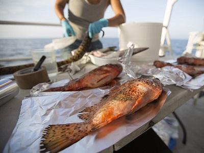 Microplastiche anche nei pesci e invertebrati